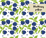 Vector blackberry seamless pattern. background, pattern, fabric design, wrapping paper, cover. Vector blackberry seamless pattern. background, pattern, fabric Stock Photography