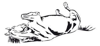 Vector blanco y negro de un caballo libre illustration