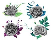 Vector blanco y negro del ramo de las flores de la acuarela Imagenes de archivo