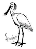 Vector blanco y negro del Spoonbill de la colección de los pájaros Foto de archivo
