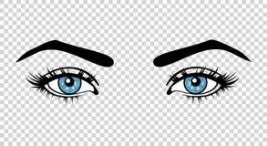 Vector blaue weibliche Augen mit langen Peitschen und bilden Sie Schöne Mädchen Stockbild