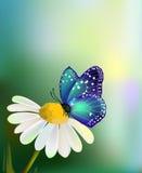 Vector blauwe vlinder op de madeliefje-bloem Stock Afbeelding