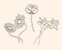 Vector bloemen royalty-vrije stock afbeeldingen
