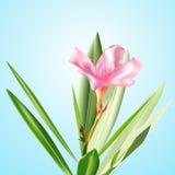 Vector bloemen Royalty-vrije Stock Foto's