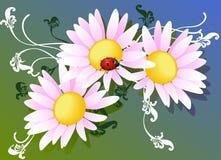 Vector bloemen en lieveheersbeestje Stock Afbeelding