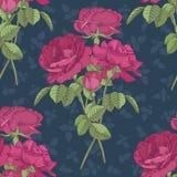 Vector bloemen naadloos patroon met boeketten van donkere roze rozen Stock Afbeeldingen
