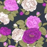 Vector bloemen naadloos patroon met hand getrokken witte en violette rozen Stock Afbeelding