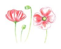 Vector Bloemen van Geschilderde Kleurrijke Bloemenwaterverf Stock Afbeelding