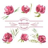 Vector Bloemen van Geschilderde Rode Rozenwaterverf Royalty-vrije Stock Fotografie