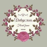 Vector bloemenkader met roze rozen Stock Fotografie