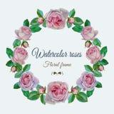 Vector bloemenkader met waterverf roze rozen Stock Foto's