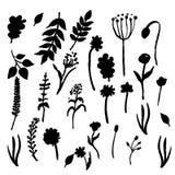 Vector bloemenreeks Grafische inzameling met bladeren en bloemen, die elementen trekken De lente of de zomerontwerp voor uitnodig Stock Fotografie