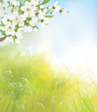 Vector blossoming branch of apple tree, spring landscape. vector illustration