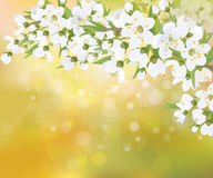 Vector blossoming branches of apple  tree, spring background. Blossoming branches of apple  tree, white flowers on bokeh sunny spring background Royalty Free Stock Image