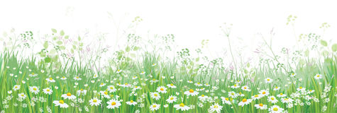 Vector  blossoming flowers  field. Vector  blossoming flowers  field, nature border isolated Stock Photography