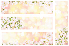 Vector blossoming spring banners. Vector blossoming branches of tree, spring banners Stock Images