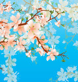 Vector blossoming tree brunch in the garden on the blue sky back Royalty Free Stock Photo