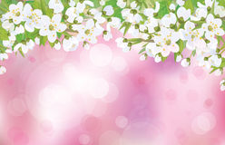 Vector blossoming tree on pink background. Stock Image