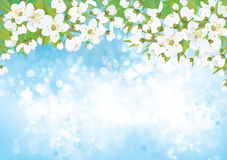 Vector blossoming  tree, spring background. Royalty Free Stock Photos
