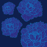 Vector  blue background with beautiful peonies Stock Photography
