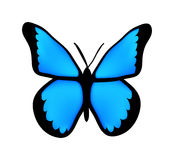 Vector blue butterfly Stock Image