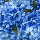 Vector blue realistic hydrangea, lavender Royalty Free Stock Images