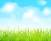 Vector blue sky and green grass Stock Image