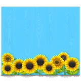 Vector Blue Wooden Board with Sunflowers Royalty Free Stock Photo