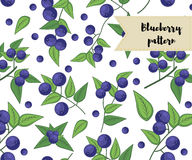 Vector blueberry seamless pattern. background, pattern, fabric design, wrapping paper, cover. Vector blueberry seamless pattern. background, pattern, fabric Royalty Free Stock Images