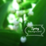 Vector blurred nature spring green background Royalty Free Stock Photo