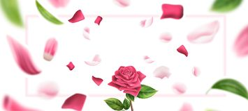 Vector blurred rose petal, leaves background 3d. Realistic rose on blurred rose petal and leaves background. Romantic valentines day internation women day 8 of royalty free illustration