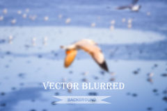 Vector blurred Royalty Free Stock Photo