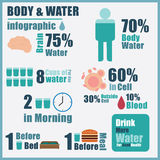 Vector of body water infographic Stock Images