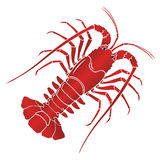 Vector boiled spiny or rock lobster. Vector boiled spiny lobster or rock lobster on white background. Vector illustration Royalty Free Stock Photo
