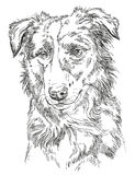 Vector Border collie Royalty Free Stock Photography