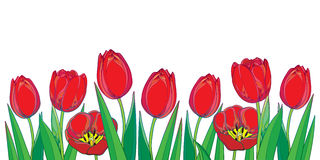 Vector border with outline red tulips flowers and green leaves isolated on white. Template with ornate floral elements for spring. Royalty Free Stock Photos