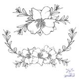 Vector bosquejado de Camellia Wreaths y de los arreglos libre illustration