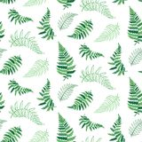 Vector pattern illustration of fern leaf. Vector botanical illustration of fern leaf. Isolated outline modern drawing of tropical plant. Set of exotic fern Stock Photos