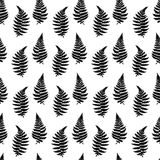 Vector pattern illustration of fern leaf. Vector botanical illustration of fern leaf. Isolated outline modern drawing of tropical plant. Set of exotic fern Royalty Free Stock Images