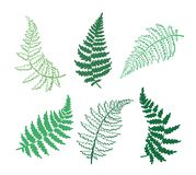 Vector botanical illustration of fern leaf. Isolated outline modern drawing of tropical plant. Set of exotic fern leaves silhouette. Design for fabric, textile Royalty Free Stock Photography