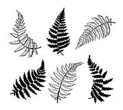 Vector botanical illustration of fern leaf. Isolated outline modern drawing of tropical plant. Set of exotic fern leaves silhouette. Design for fabric, textile Royalty Free Stock Photos