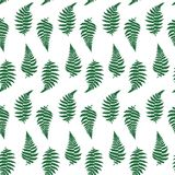 Vector pattern illustration of fern leaf. Vector botanical illustration of fern leaf. Isolated outline modern drawing of tropical plant. Set of exotic fern Royalty Free Stock Image