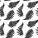 Vector pattern illustration of fern leaf. Vector botanical illustration of fern leaf. Isolated outline modern drawing of tropical plant. Set of exotic fern Royalty Free Stock Photography