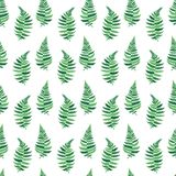 Vector pattern illustration of fern leaf. Vector botanical illustration of fern leaf. Isolated outline modern drawing of tropical plant. Set of exotic fern Stock Images