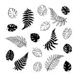 Vector illustration of fern and monstera leaves. Vector botanical illustration of fern and monstera leaf. Isolated outline modern drawing of tropical plant. Set Stock Photos