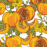 Vector botanical pattern with pumpkins, flowers and leaves. Stock Image