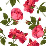 Webbotanical seamless pattern with Luxurious bright red roses fl. Vector botanical seamless pattern with Luxurious bright red roses flowers.Modern floral pattern royalty free illustration