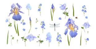 Blue flower set Stock Photography