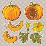 Vector botanical set with isolated pumpkins, flowers and leaves. Vector botanical set with isolated pumpkins, flowers and leaves Stock Image