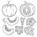 Vector botanical set with pumpkins, flowers and leaves. Vector botanical set with pumpkins, flowers and leaves vector illustration
